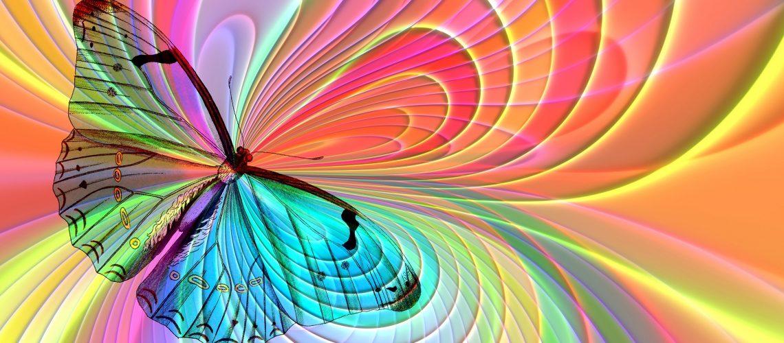 vlinder-arrangement-2772438_1920